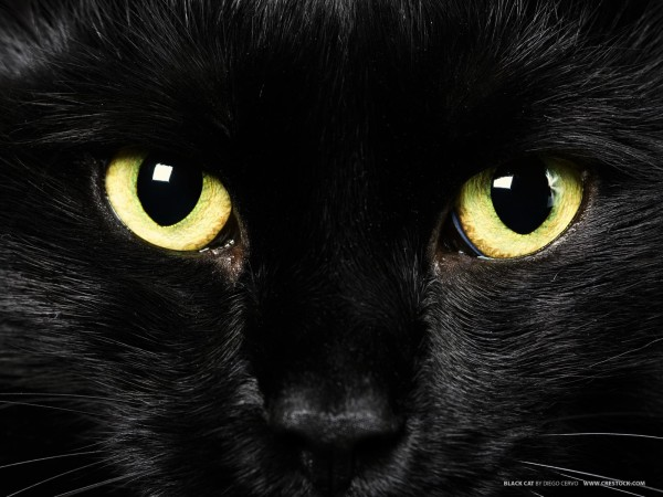 black-cats-awesomelycute.com-32