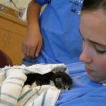 teen-girl-looking-at-foster-kitten1