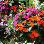 Plants-Hanging-Baskets-5