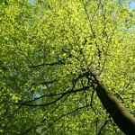 9740274-green-tree-leaves-closeup-in-flower-spring-Stock-Photo