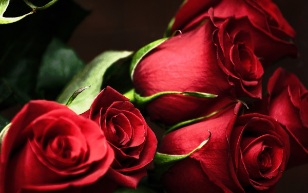 Red-Roses443